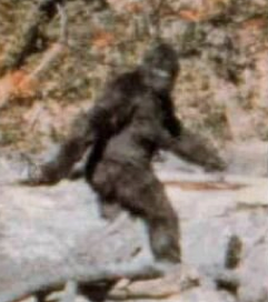 Bigfoot Researcher Looks To MIT For Proof