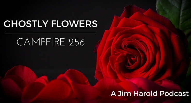 Ghostly Flowers – Campfire 256